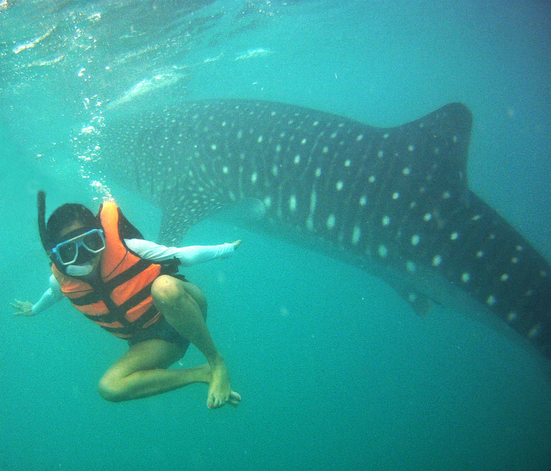 dumaguete oslob siquijor day 2 part 1 day trip in oslob swimming