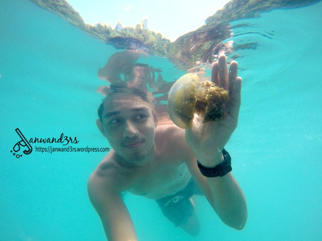stingless-jellyfish-bucas-grande